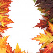 Stock Photo: Vivid autumn maple leaves isolated on white