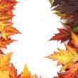 白で隔離され鮮やかな秋のカエデの葉 — ストック写真