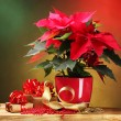 Beautiful poinsettia in flowerpot on wooden table on bright background — Stock Photo