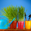 Green grass in two flowerpot on blue background — Stockfoto #8585348