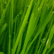 Green grass closeup — Stockfoto #8585359