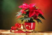 Beautiful poinsettia in flowerpot on wooden table on bright background — Stock Photo