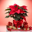 Beautiful poinsettia in flowerpot, New Year's balls and gifts - Stock Photo