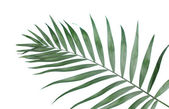 Beautiful palm leaf on blue background — Stock Photo