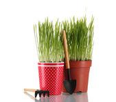 зеленая трава в двух горшок, изолированные на белом — Стоковое фото