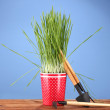 Green grass in a flowerpot on blue background - Стоковая фотография