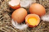 Chicken eggs in a nest closeup — Stock Photo