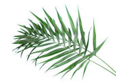 Beautiful palm leaves on blue background — Stock Photo