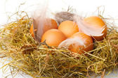 Chicken eggs in a nest isolated on white — Стоковое фото