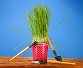 Green grass in a flowerpot on blue background — Stock Photo