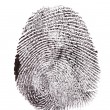 Stock Photo: Fingerprint isolated on white