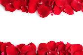 Beaux pétales de roses rouges, isolés sur blanc — Photo