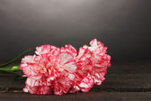 Beautiful carnations on wooden table on grey background — Foto Stock