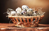 Quail eggs in nest on wooden table on brown background — Stock Photo