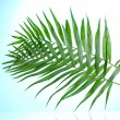 Royalty-Free Stock Photo: Beautiful palm leaves on blue background