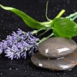 Spa stones with water drops, lavender and leaves on black background — Stock Photo