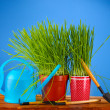 Green grass in two flowerpot on blue background — Foto Stock
