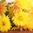 Orange Chrysanthemums flowers on wooden background — Stock Photo