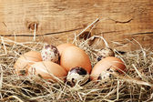 Tavuk ve bıldırcın yumurta ahşap zemin üzerinde bir yuva — Stok fotoğraf
