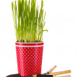 Green grass in a flowerpot isolated on white — Foto Stock