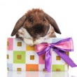 Lop-eared rabbit in a gift box with purple bow isolated on white — Stock Photo #8874610