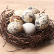 Quail eggs in nest on wooden background - Stock Photo