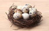 Quail eggs in nest on wooden background — Stock Photo