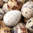 Quail eggs closeup - Stockfoto
