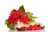 Red berries of viburnum in wooden box, chestnuts and briar isolated on whit — Zdjęcie stockowe