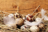 Quail eggs in a nest on wooden background — Stock Photo