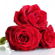 Three beautiful red roses isolated on white — Stock Photo #8923083