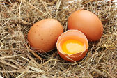 Chicken eggs in a nest closeup — Stock Photo
