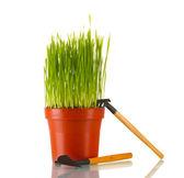 Grönt gräs i en blomkruka isolerad på vit — Stockfoto