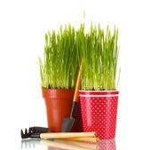 Zielona trawa w dwóch doniczka na białym tle — Zdjęcie stockowe