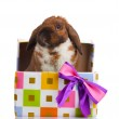 Lop-eared rabbit in a gift box with purple bow isolated on white — Stock Photo #9132744