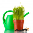Green grass in a flowerpot isolated on white — Stok fotoğraf