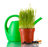 Green grass in a flowerpot isolated on white — Stock Photo