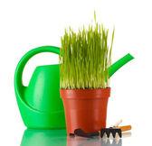 Zielona trawa w wazonie na białym tle — Zdjęcie stockowe
