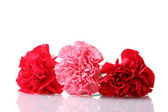 Bouquet of carnations isolated on white — Stock Photo