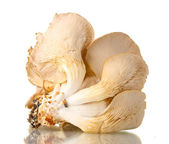 Oyster mushrooms isolated on white — Stock Photo