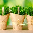 Thyme herb plants in pots with beautiful paper decor on wooden table on green background — Stock Photo #9261905