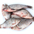 Fresh fishes isolated on white — Foto de Stock