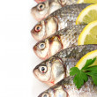 Fresh fishes with lemon and parsley isolated on white - Photo