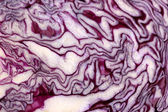 Red cabbage slice close-up isolated on white — Foto de Stock