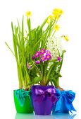 Beautiful spring flowers in pots isolated on white — Stock Photo