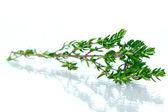 Tomillo fresco verde aislado en blanco — Foto de Stock
