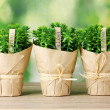 Thyme herb plants in pots with beautiful paper decor on wooden table on green background — Stock Photo #9405455