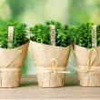 Thyme herb plants in pots with beautiful paper decor on wooden table on green background - Stock Photo