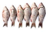 Fresh fishes isolated on white — Stock Photo