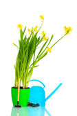 Beautiful yellow daffodils, watering can and garden tools isolated on white — Stock Photo
